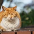 のんびり猫@城ケ島