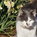 花と猫@城ケ島