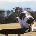飛び降りそうな猫@城ケ島