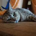 Photos: ぐーたら猫