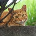 野良とは思えないあざとかわいい猫