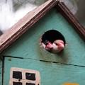 Photos: ブンチョウの家