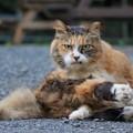 Photos: 頼りになりそうな猫