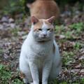 ムスッとした猫