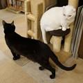白猫・黒猫