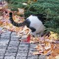 写真: 頭隠して尻隠さない猫