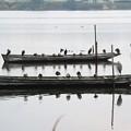 写真: 船に乗る鳥たち