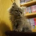 もふもふ子猫2