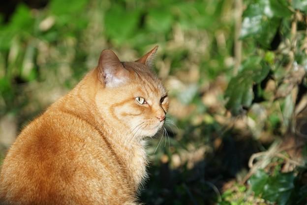 落ち着いた雰囲気の猫