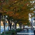 Photos: 御池通にて