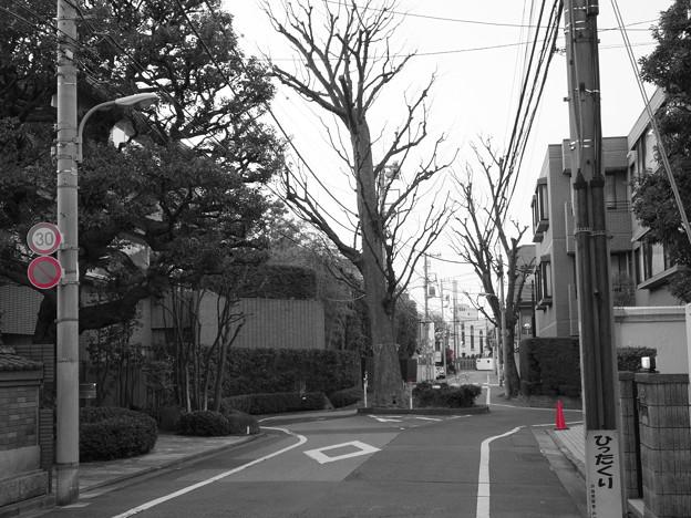 道路の真ん中にある巨木