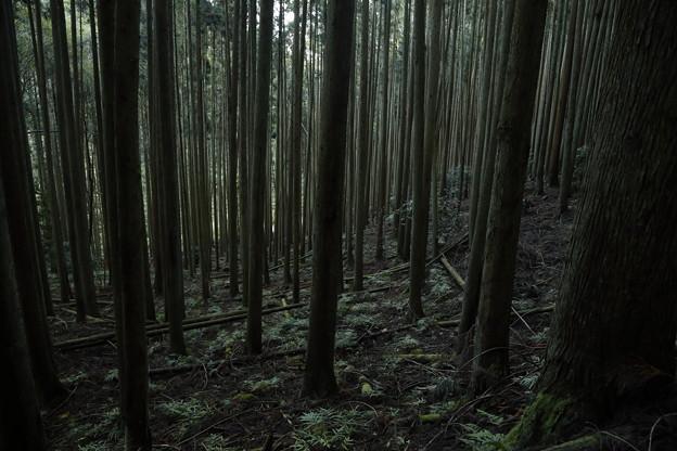 京都・愛宕山32