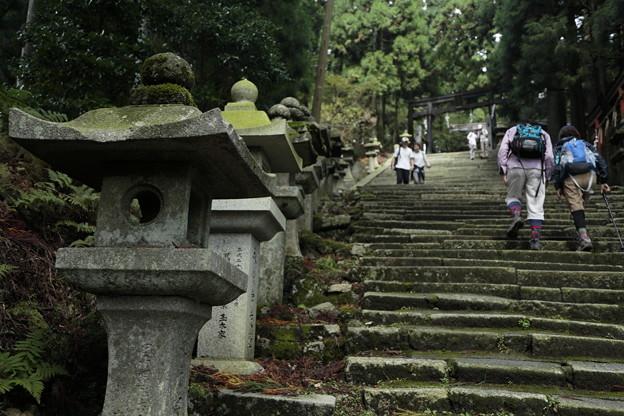 京都・愛宕山14