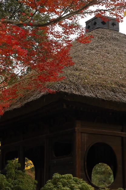 奈良公園09