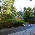 殿ヶ谷戸庭園_001