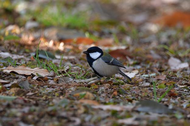 鳥_489