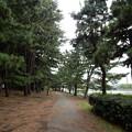 写真: 大井ふ頭中央海浜公園