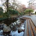 写真: 根川緑道