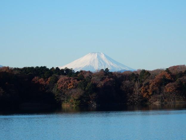 多摩湖富士山