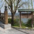 写真: 宇治川と宇治橋