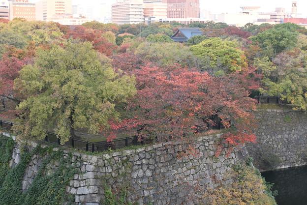 大阪城西の丸庭園の紅葉