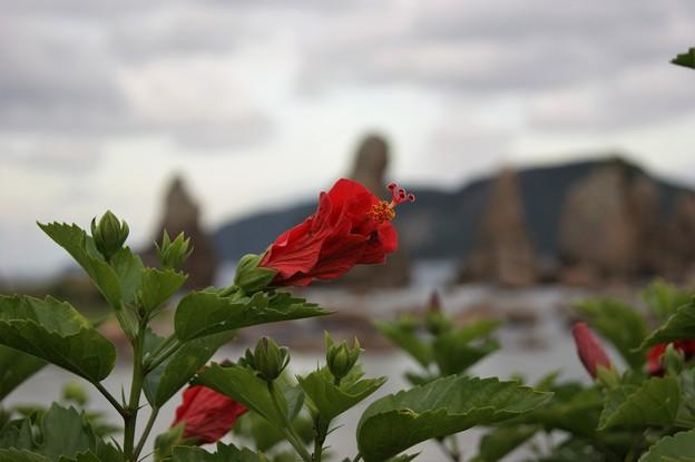 花と橋杭岩