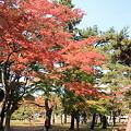 合浦公園・紅葉01-11.11.01