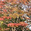 合浦公園・紅葉02-11.11.01