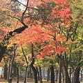 合浦公園・紅葉03-11.11.01