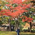合浦公園・紅葉04-11.11.01