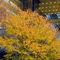 写真: 大阪ステーション黄葉