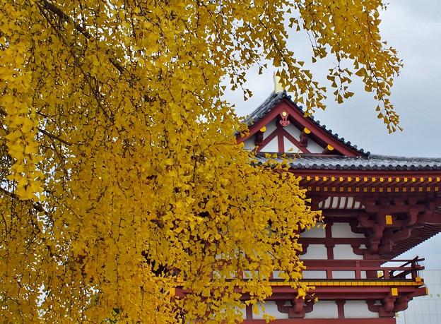 写真: 四天王寺黄葉