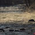 冬の朝の利根川