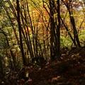横谷観音より王滝への紅葉