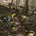 王滝への道