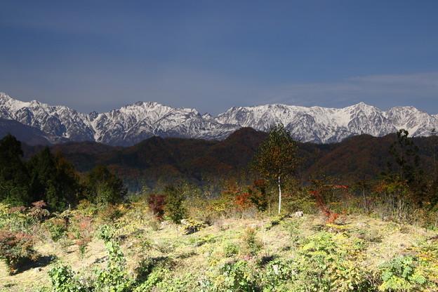 紅葉と白馬三山の山々