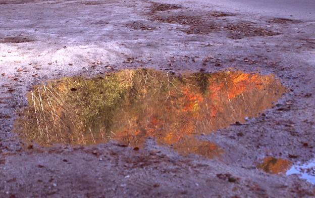 水たまりの紅葉