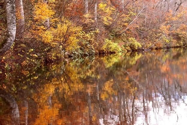 静かな鎌池の反映
