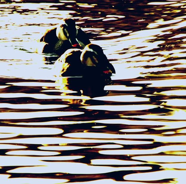 鴨の泳ぐ水面模様