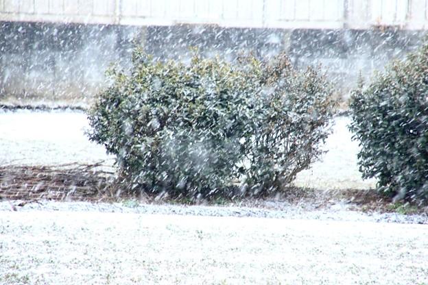 雪の降り始め10時半ころ
