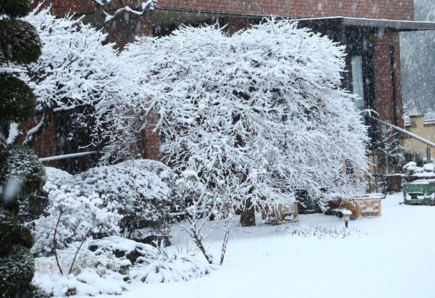 もみじの枝の雪化粧