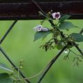 写真: 花~実へ