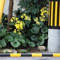 写真: 黄色の風景2