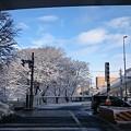 Photos: 雪色の樹木
