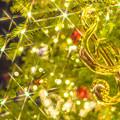 写真: クリスマスなツリー