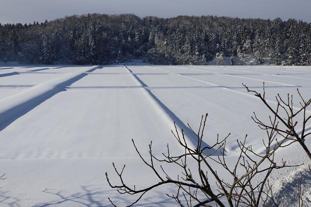 写真: 雪の水田の朝