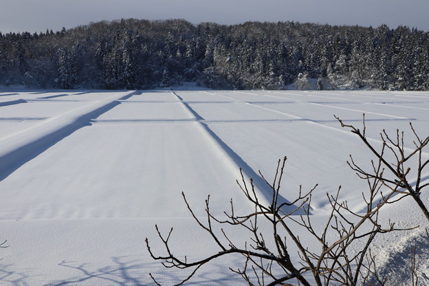 Photos: 雪の水田の朝