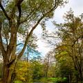 写真: 古い木のある水辺