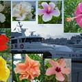 写真: 高速艇とハイビスカス