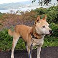 写真: 大平山_1442